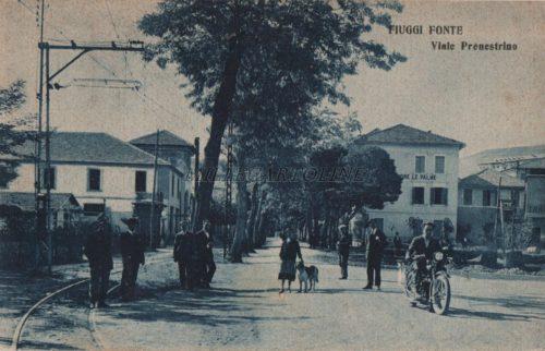 Cartolina Postale FIUGGI Palme